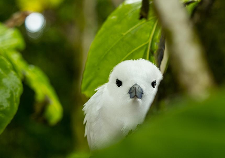 Isla Cousin, Aves