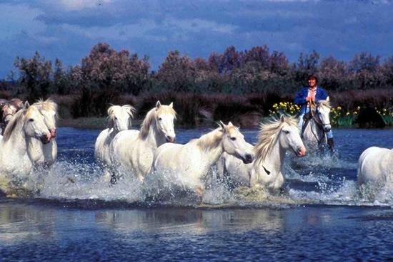 La Camarga, caballos salvajes