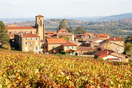 Viñedos Beaujolais
