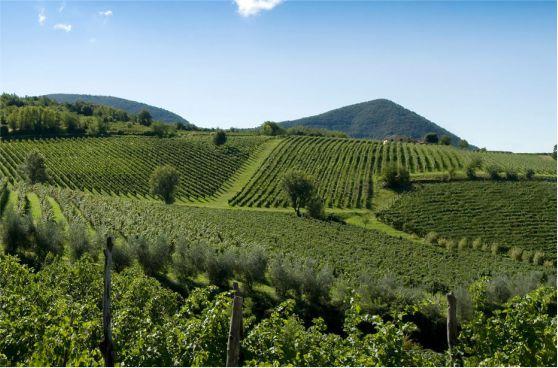 La Ruta de los Vinos a través de las colinas euganeas