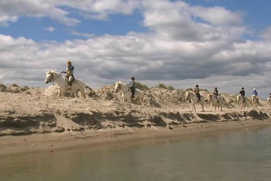 La Camargue, caballos
