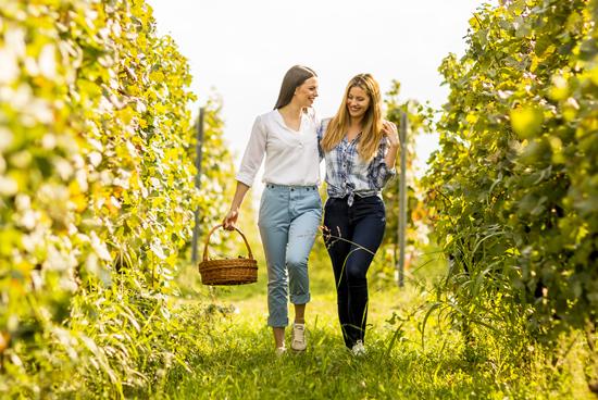 Paseo vinicola