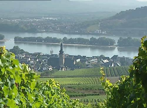 Rüdesheim: Cata De Vino